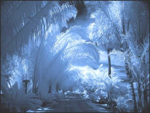 cold_palms1