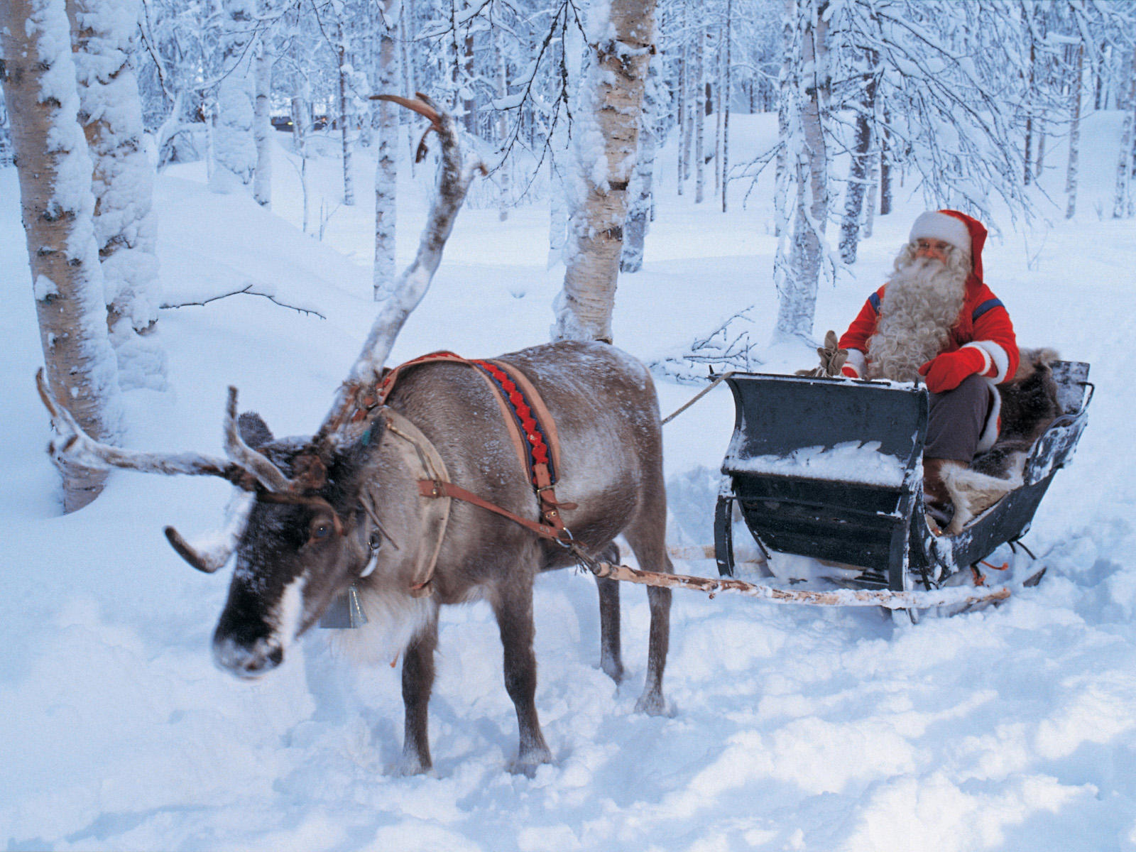 Most Inspiring Wallpaper Horse Winter - santa-claus-sleigh-ride-lapland-finland  2018_60989.jpg