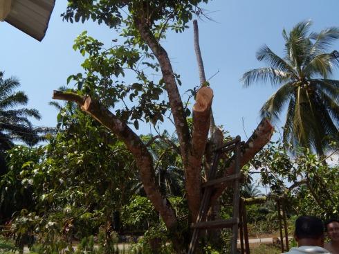 Tanjung Batu Laut - trimmed