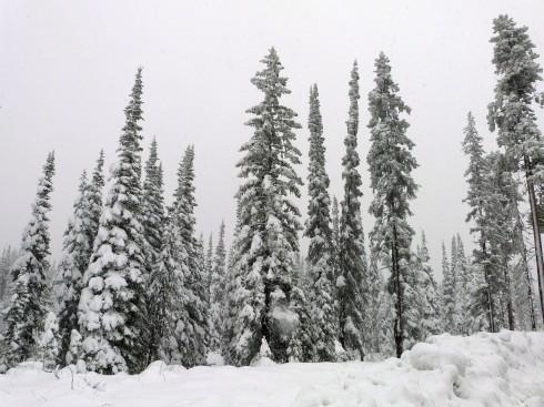 Montana Fall - Bitterroot Valley - 2013